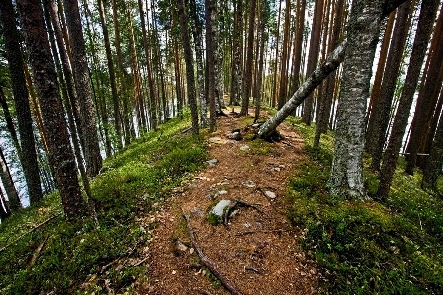 Harju Petkeljärven kansallispuistossa