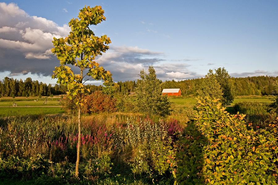 Autumn at Viikinojanpuisto park