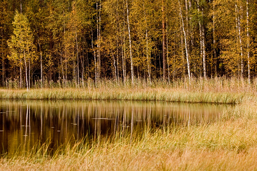 A autumn view to a pond
