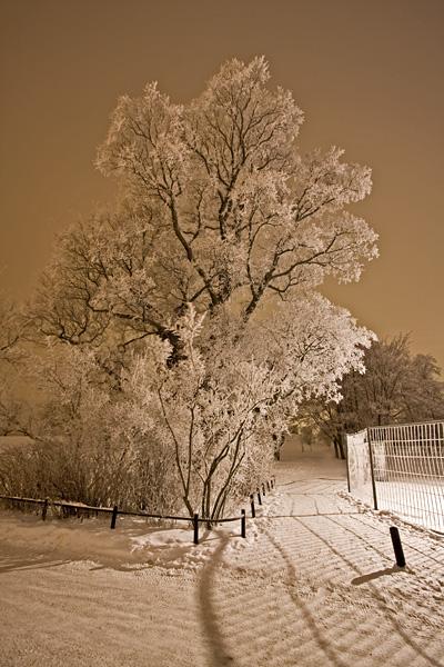 Huurteisia puita Kaivopuistossa
