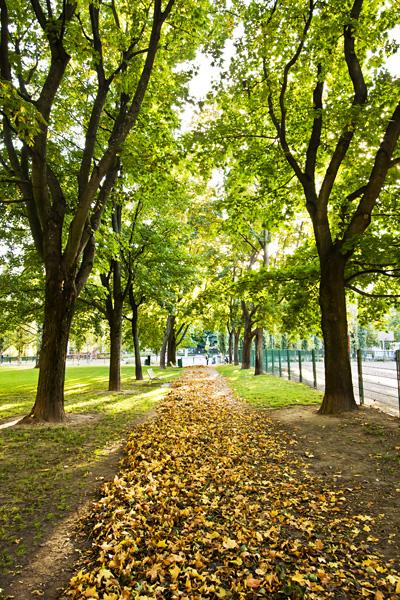 Autumn foliage at Tehtaanpuisto